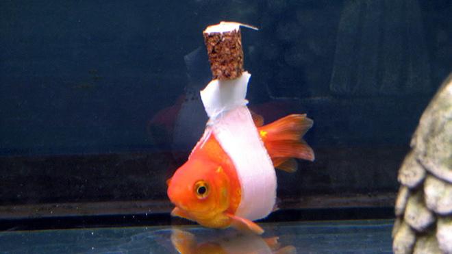 Как сделать что бы мужчина рыба был моим