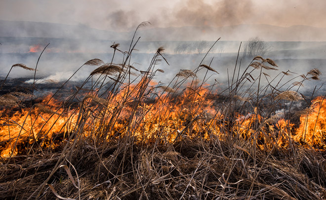 """Attēlu rezultāti vaicājumam """"природные пожары"""""""