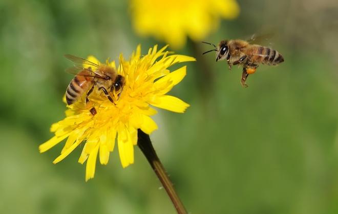 النحل ايضا يشرب الخمر ويعاقب عليه