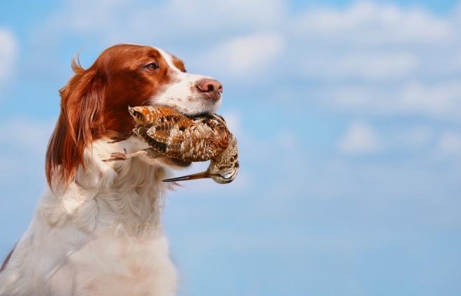 Собака с птицей в зубах