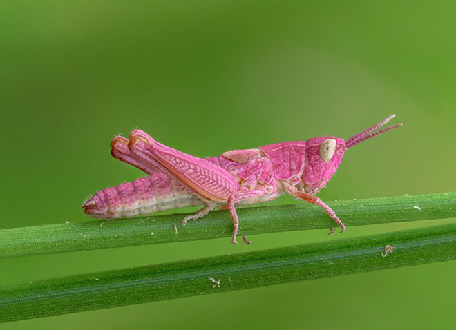 Картинки по запросу зелено-розовый