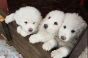 Надежда еще есть: под завалами отеля в Италии нашли трех щенков