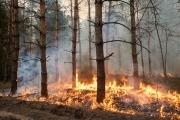 Хабаровский край ожидают рекордные лесные пожары