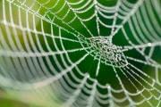 В Новой Зеландии пауки сплели 30-метровую паутину: видео