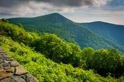 Ученые пересмотрели судьбу тропических лесов