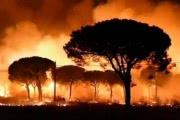 В Испании пытаются спасти от огня легендарный заповедник