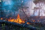 Площадь природных пожаров в Якутии возросла в два раза за 24 часа
