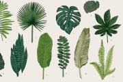 Почему у листьев разные размеры и формы?