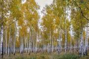 Теплая погода на юге Восточной Сибири
