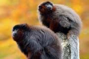 Приматы способны испытывать чувство ревности