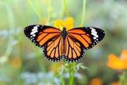 Сокращение численности насекомых назвали «экологическим Армагеддоном»