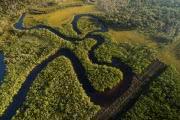 В исчезновении амазонских лесов виноваты шахтеры и фермеры