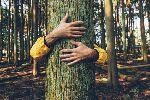 Массовое восстановление мировых лесов сведет на нет десятилетие выбросов CO2