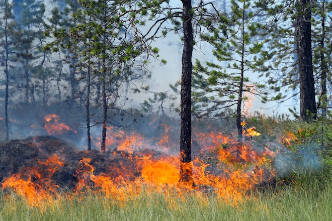cause and effects of forest fires Forest fires are among the deadliest happenings in nature with this article, we hope to shed some light on the causes and effects of forest fires.