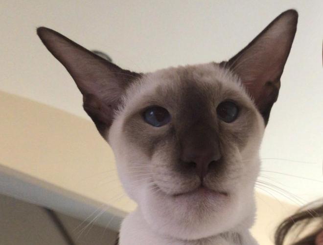 Кот, проглотивший осу, стал звездой Сети